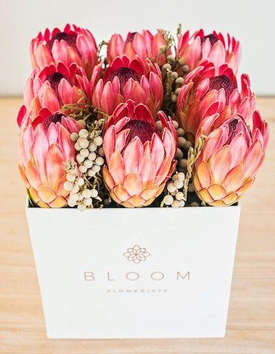 Bloom006-1